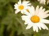 Doğal Bitki Örtüsü