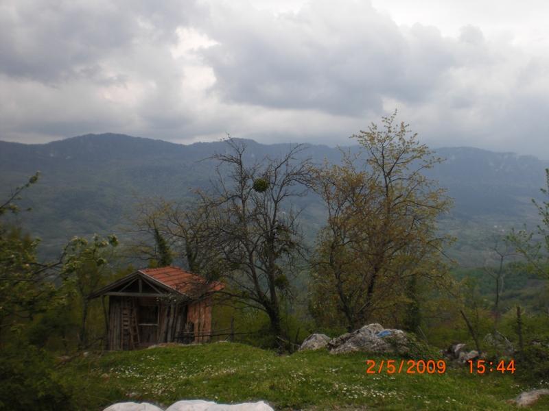 pifayani_0